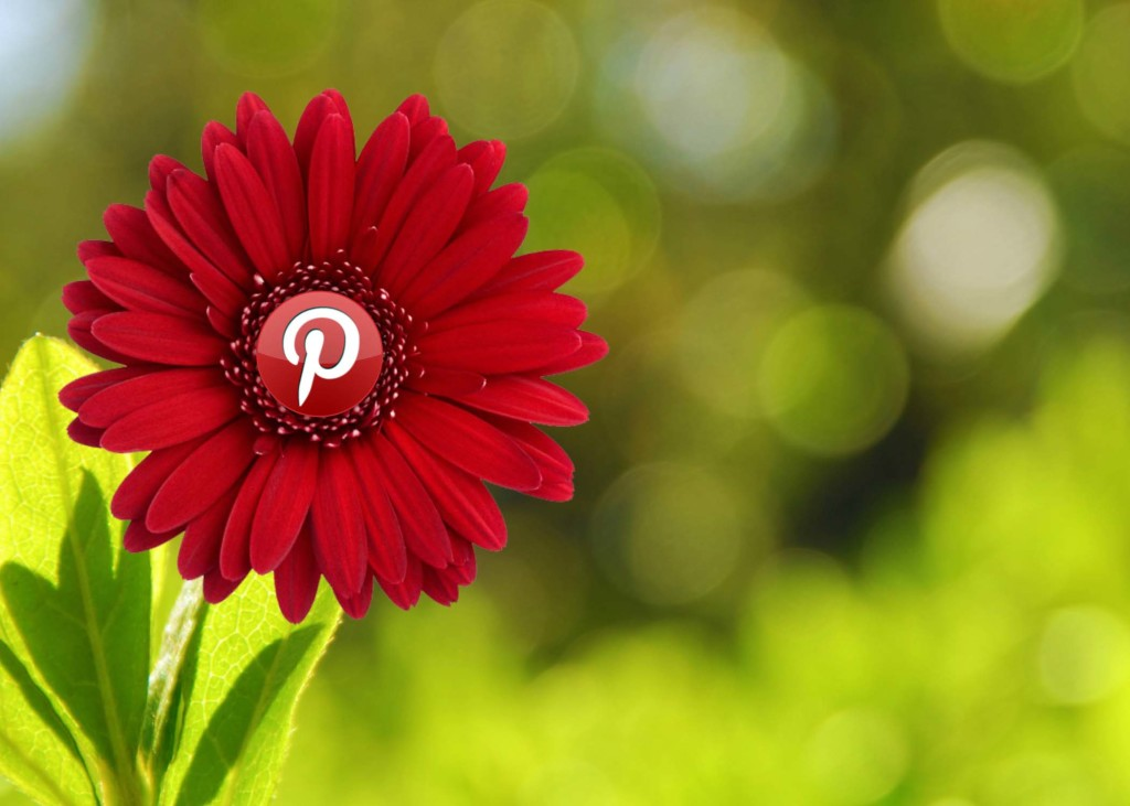 Verify your Blog or website with Pinterest.